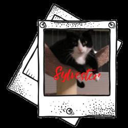 Sylvester - S.V.